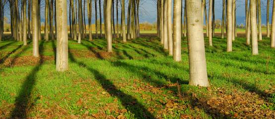 alberi 539