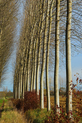 alberi 540