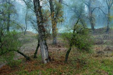 alberi 544