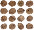 Group of walnuts isolated on white background
