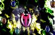 Illustration of A vivid coloured lady bug moving