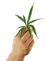illustration of   human hand with a sheet of hemp