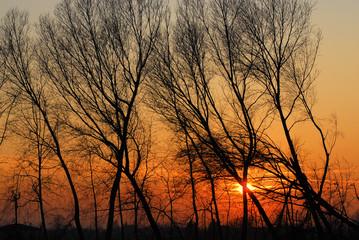 alberi 587