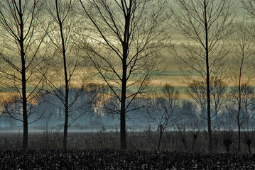 alberi 572