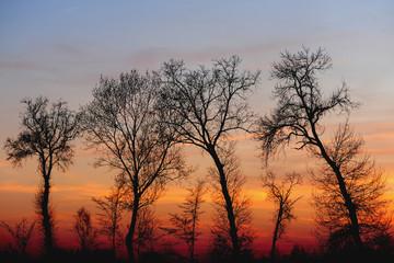 alberi 609