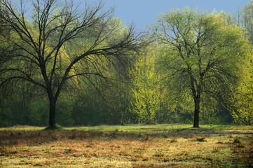 alberi 642