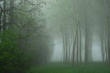 alberi 667