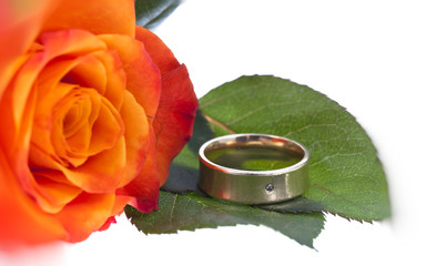 orange Rose mit Ring
