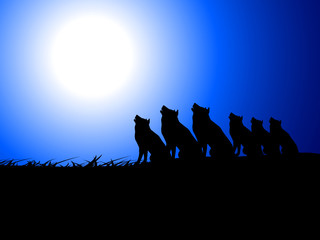 wolfs on night time