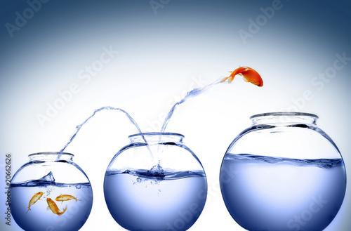 goldfish jumping - 20662626