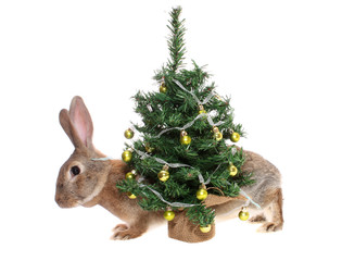 rabbit with a fur-tree.