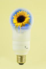 lampadina girasole