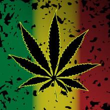 Konopi marihuany