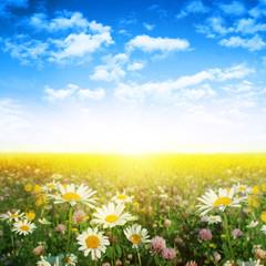 Flower field,blue sky and sun.