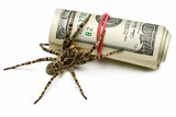 Venomous spider stand guard of cash isolated on white poster