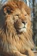Quadro leone