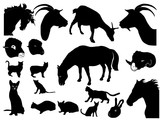 collection of domestic animals poster