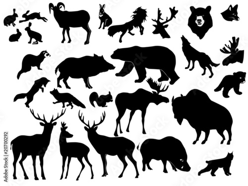 collection of forest animals