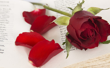 Rose and old book