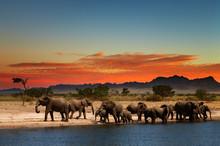 Stado słoni w afrykańskiej sawanny