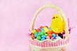 Easter basket, chick and jelly beans