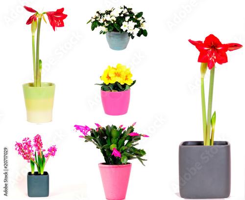 zimmerpflanzen bl ten blumen von simone werner ney. Black Bedroom Furniture Sets. Home Design Ideas