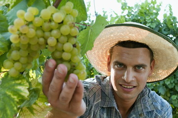 Young man in vineyard holding white grapes