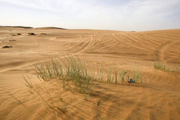 Landscape of Dubai desert with vegetation, UAE