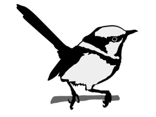 silhouette of wren