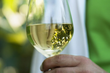 Hand of young man holding a glass of white wine with grapes reflected