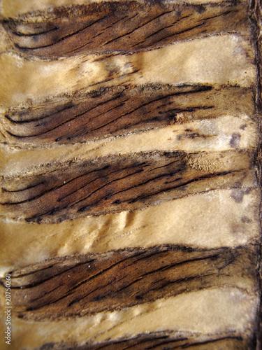 semilla, detalle asbtracto