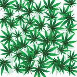 Marijuana foliaje isolated on white background poster