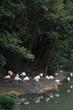 フラミンゴのグループ