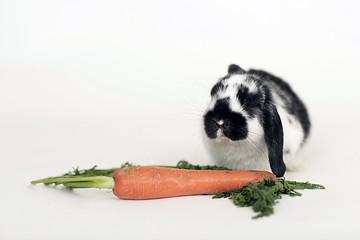 Osterhase mit Karotte