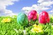 Bunte Eier auf Frühlingswiese