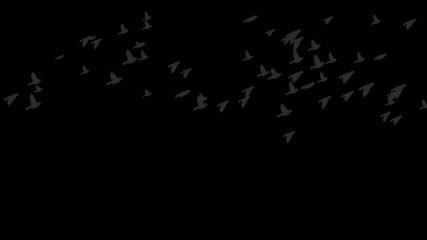 birds flock at night