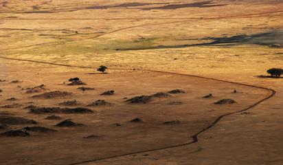 Detail of the savana in Ngorongoro Crater