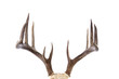 Large whitetail buck antlers isolated on white background