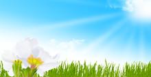 Zen krajobraz, kwiaty wiosna na łące