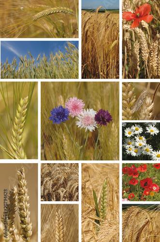 canvas print picture épi d'orge et de blé