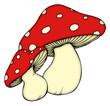 Leinwanddruck Bild - Pilz, Pilze, Wald, Fliegenpilz, giftig, Gift, Herbst