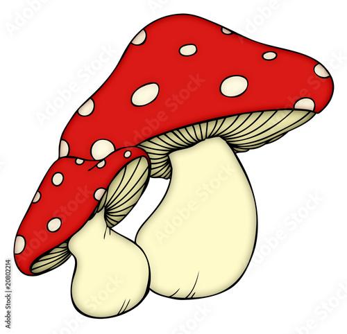 Pilz, Pilze, Wald, Fliegenpilz, giftig, Gift, Herbst - 20802214