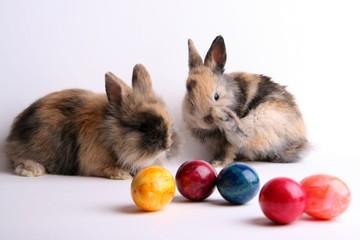 Zwei Osterhasen mit Eiern