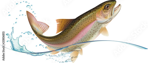 Jumping trout - 20806813