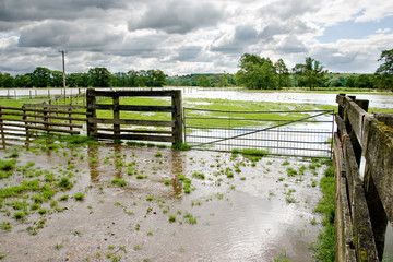 Flooded Field