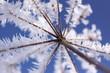 Eisblume aus Raureif
