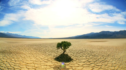 Concept Shot of Living Tree in Desert Landscape