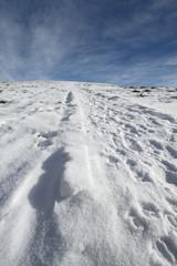 neve fresca