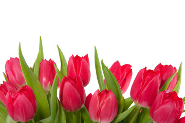 a bunch of red tulips isolated over white