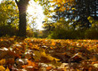 Autumn in the park..